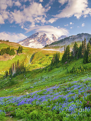 Royalty-Free and Rights-Managed Images - Mount Rainier Lenticular Cloud Golden Gate Trail by Mike Reid