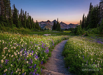 Vintage Uk Posters - Mount Rainier National Park Wildflower Trail by Mike Reid