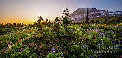 Celebrity Watercolors - Mount Rainier Wildflowers Meadow Panorama by Mike Reid