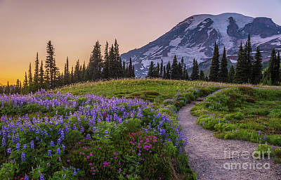 Vintage Uk Posters - Mount Rainier Wildflowers Trail to Paradise by Mike Reid