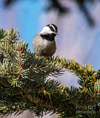Travel - Mountain Chickadee by Melissa OGara