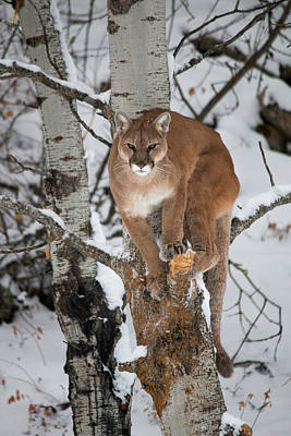 Comic Character Paintings - Mountain Lion in a Tree by Teresa Wilson