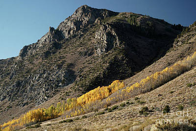 Vintage Pharmacy Royalty Free Images - Mountain Peak with Fall Colors on the June Lake Loop, Mono Count Royalty-Free Image by Wernher Krutein