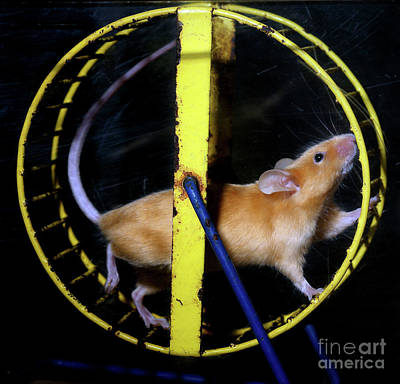 Priska Wettstein Pink Hues - Mouse on a Wheel, Rat Race forever by Wernher Krutein