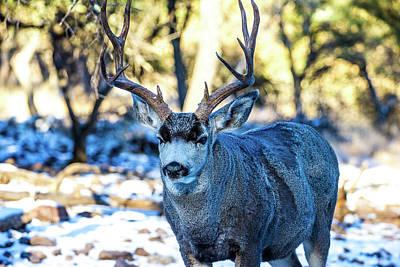 Popstar And Musician Paintings - Mule Deer Buck 001134 by Renny Spencer