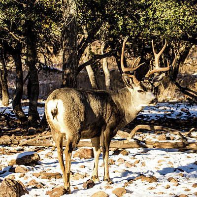 Fruits And Vegetables Still Life - Mule Deer Buck 001469 by Renny Spencer