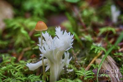 Pucker Up - Mushroom 4 by Veikko Suikkanen