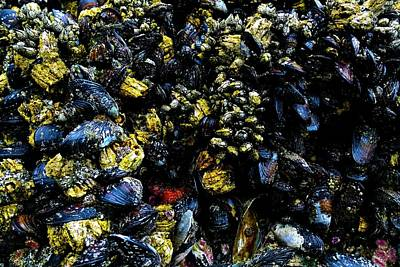 Jerry Sodorff Royalty-Free and Rights-Managed Images - Mussel Shapes by Jerry Sodorff