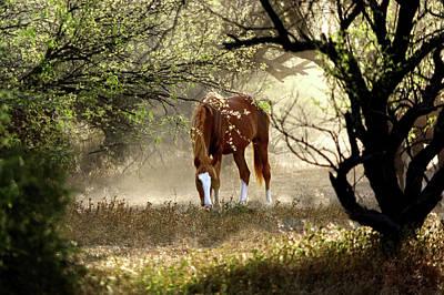 Photograph - Mustang's Secret Garden by Barbara Sophia Travels
