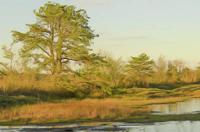 Photograph - My Favorite Pine 1 by Beth Sawickie