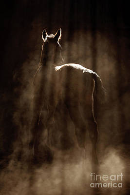 Photograph - Mysterious Foal by Shelley Paulson