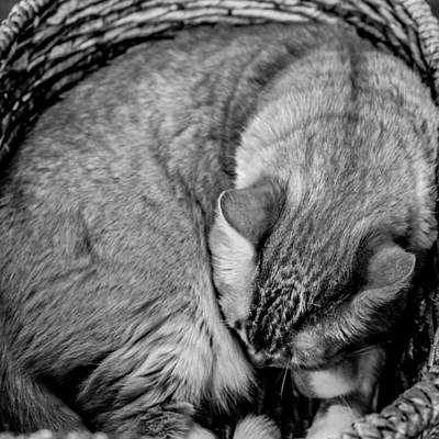 Photograph - Nap Time by Christine Buckley
