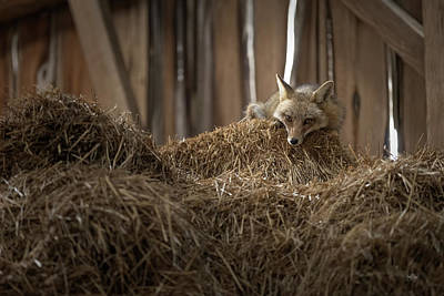 Autumn Pies - Napping In The Hay by Everet Regal