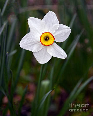 Ethereal - Narcissus by Catherine Sherman