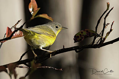 Clouds Rights Managed Images - Nashville Warbler Royalty-Free Image by David Cutts