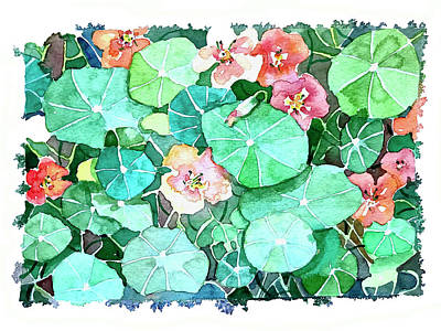 Royalty-Free and Rights-Managed Images - Nasturtium Flowers. by Luisa Millicent
