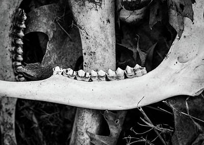 Photograph - Nature Photography - Bones by Amelia Pearn