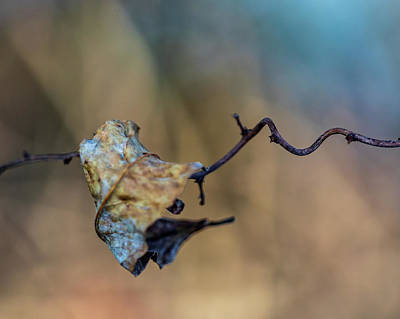 Photograph - Nature Photography - Upstate Ny Leaf by Amelia Pearn