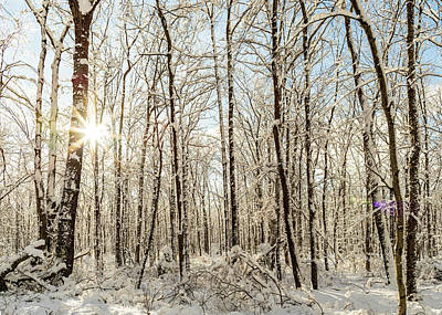 Target Threshold Nature - Nature Photography - Winter Woodlands by Amelia Pearn