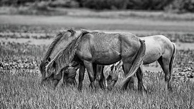 Animal Portraits - NC Wild Horse Family in Black and White by Fon Denton
