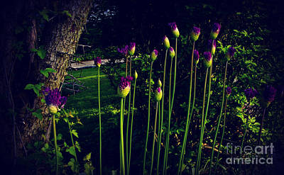 Frank J Casella Royalty-Free and Rights-Managed Images - Neighborhood Flowers at Dusk in the Sunlight by Frank J Casella