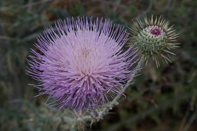 Sara Habecker Folk Print - New Mexico wildflowers. by Mike Helfrich