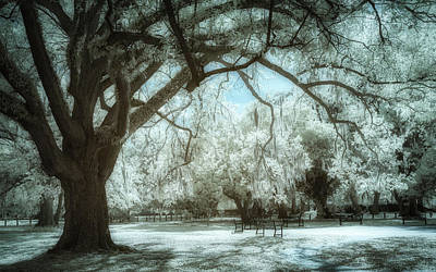 From The Kitchen - New Orleans Audubon Park Infrared by Jerry Fornarotto