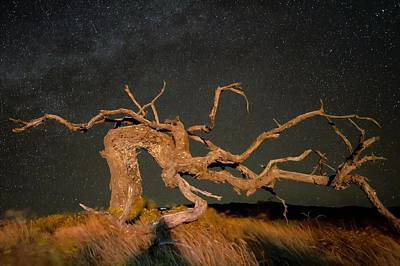 Whimsically Poetic Photographs - Night Guardian by Heidi Fickinger
