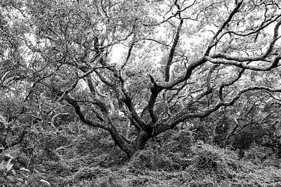 On Trend At The Pool - North Carolina Live Oak Tree in Black and White by Bob Decker