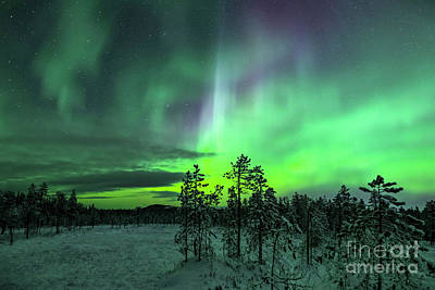 Car Photos Douglas Pittman - Northern Lights in Winter by Arterra Picture Library