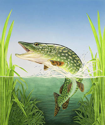 Painting - Northern Pike by Craig Austin