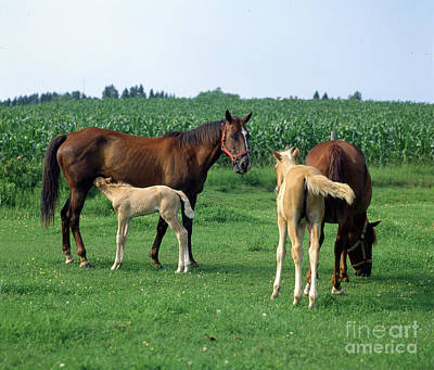 Popstar And Musician Paintings - Nursing Colt and Mare by Wernher Krutein