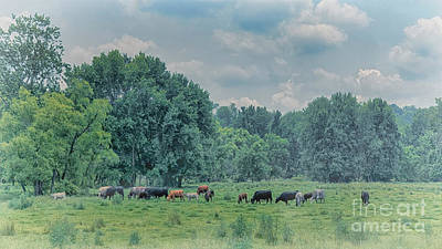 Advertising Archives - Ohio Cows on a Foggy Morning by Janice Pariza