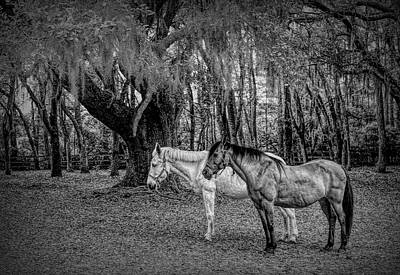 Antlers - Old Friends by David Beard