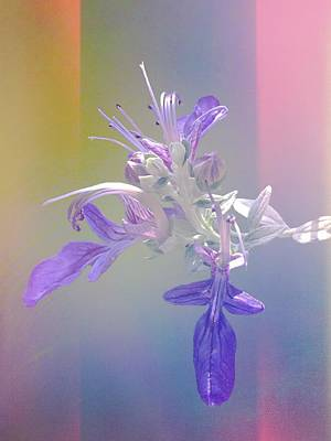 Colored Pencils - Salvia by Christina Ford