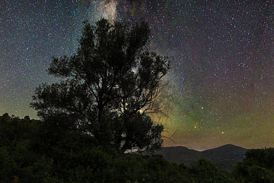 Photograph - Olive tree under the stars by Manolis Tsantakis
