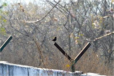 Animals Photos - On the Fence by Sonali Gangane