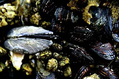 Jerry Sodorff Royalty-Free and Rights-Managed Images - Opening Mussel by Jerry Sodorff