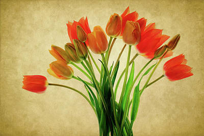 The Rolling Stones Royalty Free Images - Orange and Yellow Tulips Royalty-Free Image by Rebecca Cozart