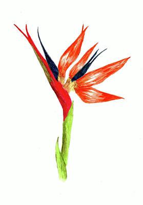 Sean - Orange Bird of Paradise by Michael Vigliotti