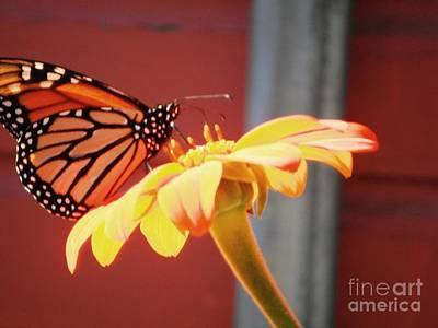 Science Collection - Orange Butterfly Flower 5 by GJ Glorijean