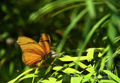 Anne Geddes Collection - Orange Butterfly by Julieanne Case