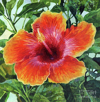 Wild Horse Paintings - Orange Pink Hibiscus by Hailey E Herrera