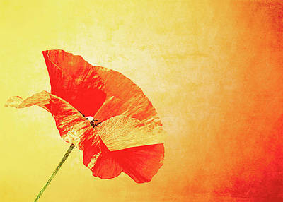 Pittsburgh According To Ron Magnes - Orange Poppy by Susan Maxwell Schmidt