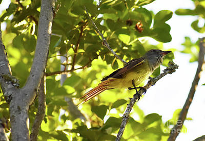 Purely Purple - Orchard Oriole by Skip Willits