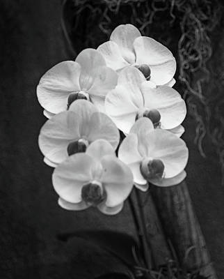 Photograph - Orchid No. 2 by Scott Thomas Images