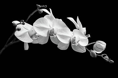Photograph - Orchid No. 5 by Scott Thomas Images
