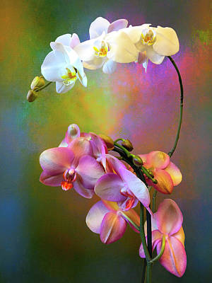 Crazy Cartoon Creatures - Orchid Splash by Christina Ford