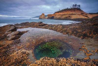 Royalty-Free and Rights-Managed Images - Oregon Tide Pool by Darren White