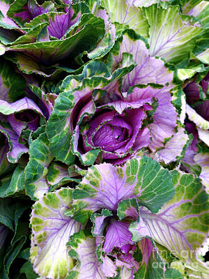 Music Figurative Potraits - Ornamental Pink Winter Cabbage by Doc Braham